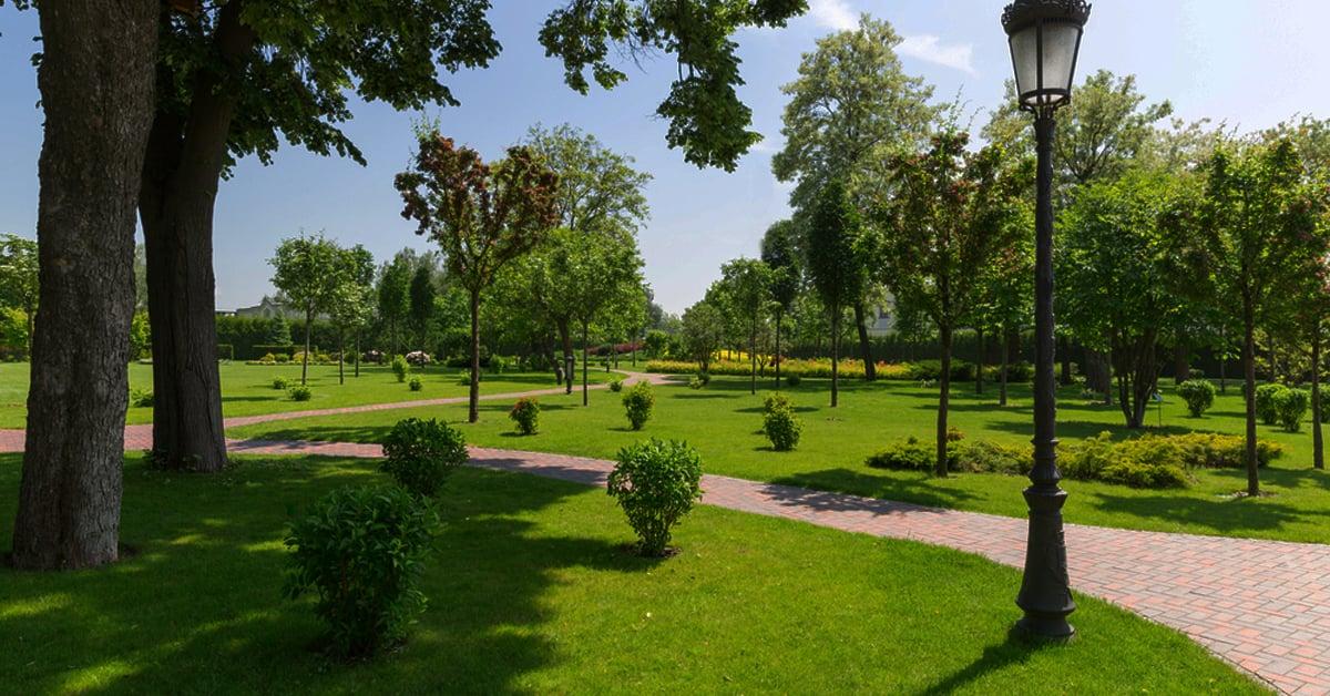 Хот суурин газар мод тарих нь стрессийн түвшинг бууруулдаг